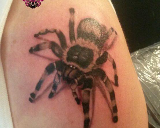 Tarantula Spinne